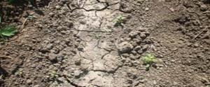 Tierra degradada por la desertificación