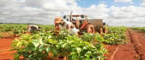 Bloqueo yanqui afecta a la agricultura de Cuba