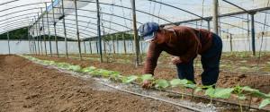 Productores de la finca El Alacrán destacados en Manejo Sostenible de Tierras