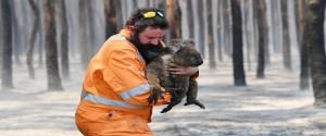 El rescatista Simon Adamczyk salva del incendio a un koala cerca del cabo Borda en la isla Canguro, al suroeste de Adelaida, Australia, el 7 de enero de 2020