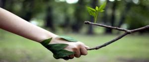Celebrará Pinar del Río Día Mundial del Medio Ambiente con medidas esenciales contra la COVID-19
