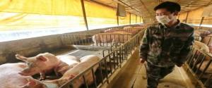 Consideran improbable pandemia por nueva cepa de gripe porcina descubierta en China