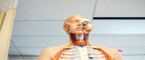 Descubren nuevo órgano en la garganta durante investigación de cáncer de próstata.