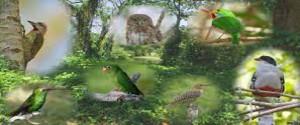 Aves cubanas