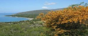 Cuba aparece entre los territorios insulares del mundo con mayor número de especies de plantas por kilómetro cuadrado. Foto: Cortesía del Máster, Alejandro Palmarola