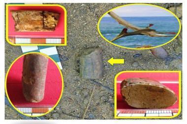 Restos fósiles de Pterosaurio