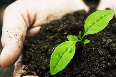 El actual sobreuso de fertilizantes y plaguicidas químicos generan múltiples problemas medioambientales; una solución es el uso de Biofertilizantes o Biopesticidas