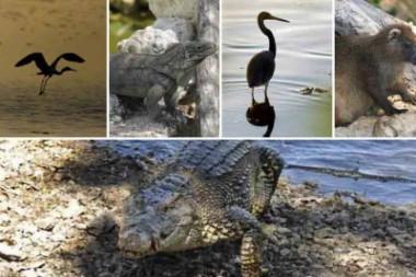 Animales que forman parte de la diversidad de la fauna de la Ciénaga de Zapata