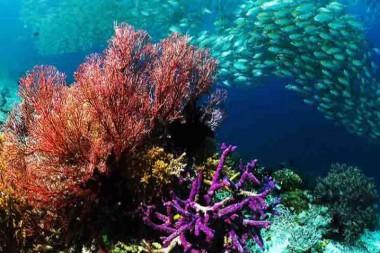 Debaten en la ONU sobre posible acuerdo para proteger los océanos