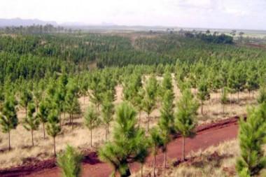 Bosque de Cuba