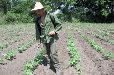 Especialista trabajando en el campo
