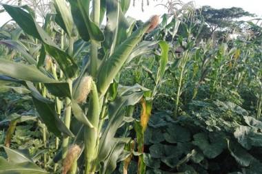 Avanza Camagüey en el Programa de la Agricultura Urbana