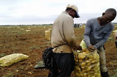 La Empresa Agropecuaria Horquita cuenta con seis escenarios de colaboración internacional en pos de mayores rendimientos./Foto: Tomada de Internet