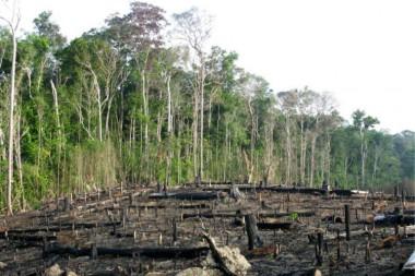 Trópicos del planeta gravemente amenazados