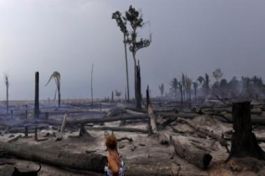 Los bosques tropicales pierden su capacidad para absorber dióxido de carbono