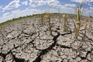 FAO exhorta a luchar contra la desertificación y la sequía