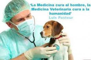 Médico veterinario consultando a un perro