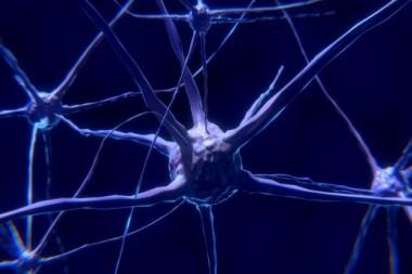 Imagen ilustrativa del cerebro